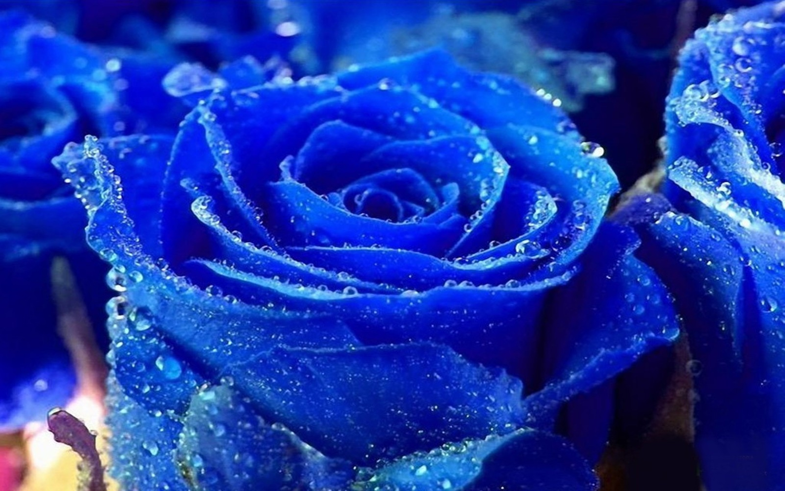 Occasion By Choosing The Best Royal Blue Roses Wine For Your Christmas Parties